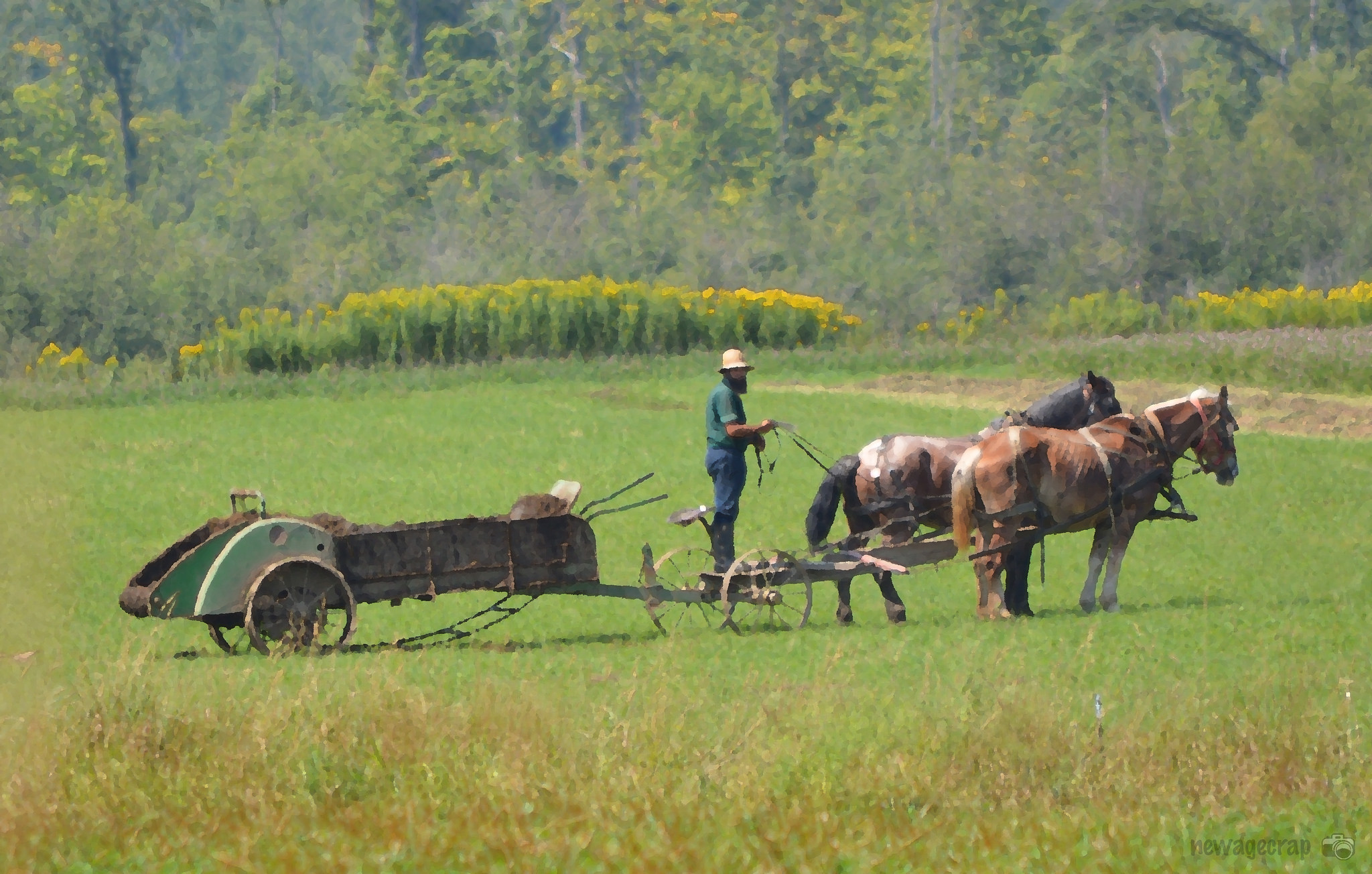 Amish-Mennonite Community